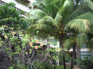 Imgp3338